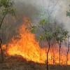 """Εισηγηση Τζανετεα στο ΠΕΣΥ με θεμα """"Οι καταστροφικές πυρκαγιές στον Δήμο Ανατολικής Μάνης""""  Εισερχόμενα x"""