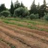 Πρόσκληση εκδήλωσης ενδιαφέροντος για τη Δράση του ΠΑΑ 2014-2020 «Γενετικοί Πόροι στην Κτηνοτροφία»