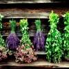 Εθνικός κατάλογος αρωματικών και φαρμακευτικών φυτών