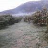 Δηλώσεις ζημιάς από τον παγετό στον Δήμο Σπάρτης.