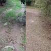 Σοβαρές ζημιές στον ελαιόκαρπο στην Λακωνία