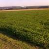 Δημόσια διαβούλευση για την καλλιέργεια βιομηχανικής κάνναβης
