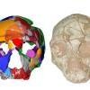Στη Μάνη εντοπίστηκε το αρχαιότερο δείγμα Homo Sapiens σε Ευρώπη και Ασία