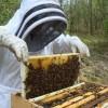 Συμμετοχή των μελισσοκόμων στις δράσεις 4.1 και 1.4 έτους 2020 του ΥΠΑΑΤ
