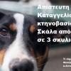 Απίστευτη φρίκη…Καταγγελία για κτηνοβασία στη Σκάλα από αλλοδαπό σε 3 σκυλιά!!! Βίντεο