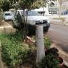 """Ποιος """"ψυχάκιας"""" κόβει τα δέντρα στη Πλατεία Κροκεών;"""