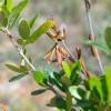 Συναγερμός για την Xylella fastidiosa. Ανακοίνωση της ΔΑΟΚ Λακωνίας