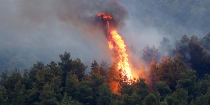 Νέα φωτιά στο Σκουτάρι Λακωνίας