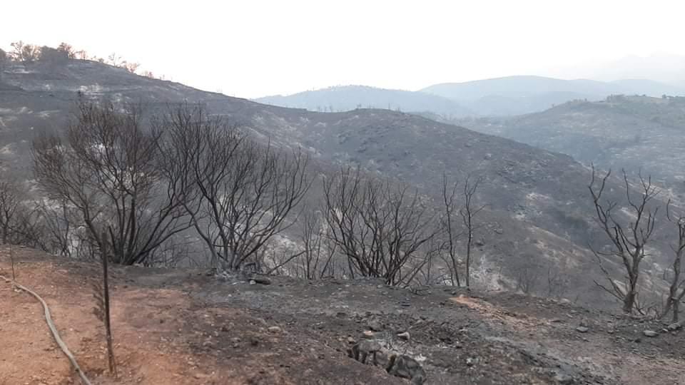 Υποβολή αιτήσεων για επιχορήγηση επιχειρήσεων πυρόπληκτων περιοχών Δήμου Ανατολικής Μάνης